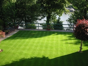 Picture for category Lawn seeds