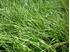 Hi-D Top Cut Grass