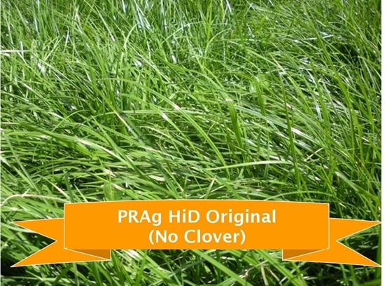 Hi-D Original - No Clover