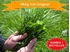 Hi-D Agricultural Grass Seed from Prag Direct