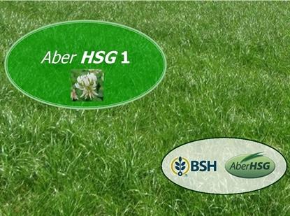 High Sugar Grass Aber
