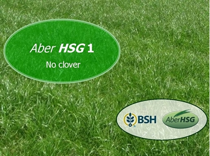 High Sugar Grass