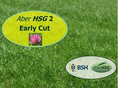 Aber HSG 2 Early Cut RC