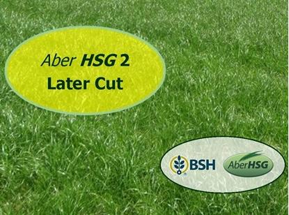 Aber HSG 2 Later Cut