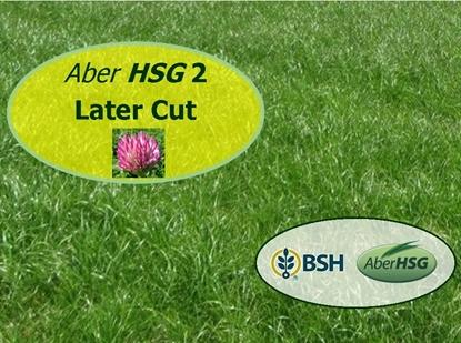 Aber HSG 2 Later Cut RC