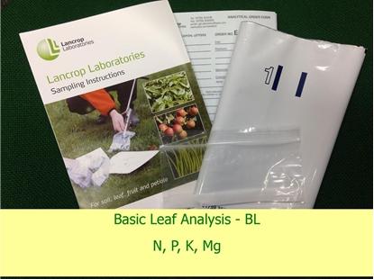 Basic Leaf Analysis