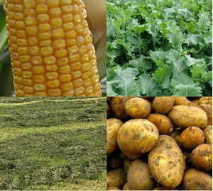 Picture for category Plant and Forage Analysis