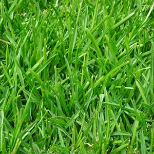 Picture for category Grass Seed
